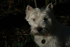 Lennie, the hardest dog ever to photograph.
