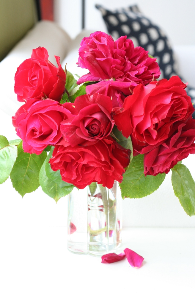 red roses 014