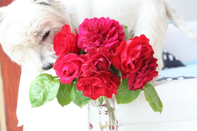 even Lennie loves the smell of roses, wish he smelt like them too