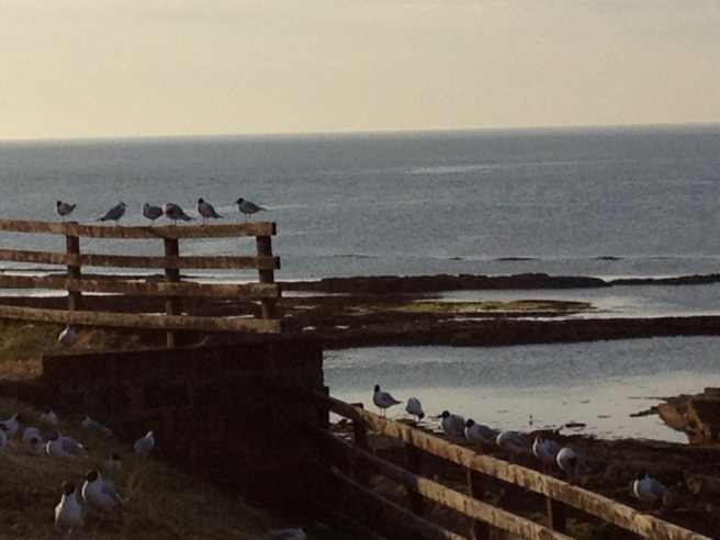 view from Seahouses