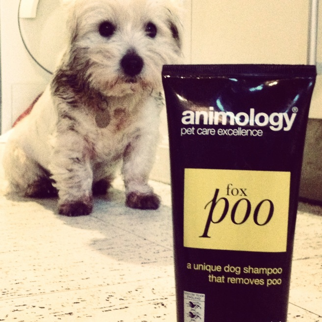 just as well my sister bought the dogs this luxury shampoo