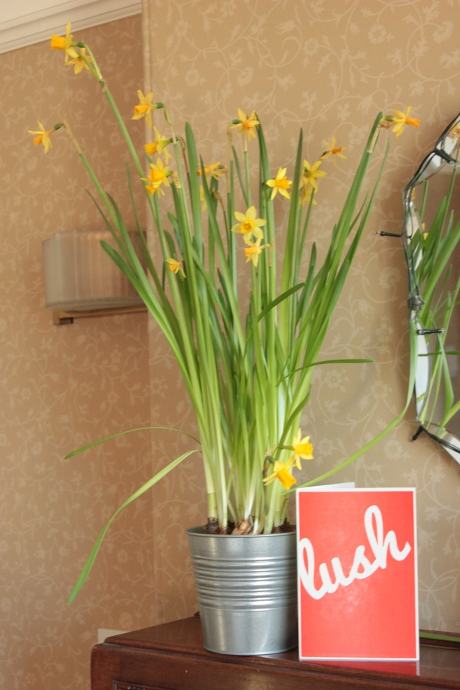 I have pots of daffodils everywhere at the moment - cost so little and give so much joy