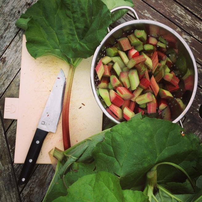First rhubarb harvested - made a splendid crumble.